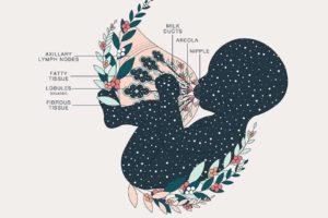 Anatomie de la lactation Duvet Days